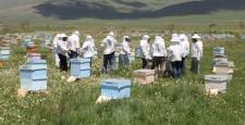 Arı Ölümleri İle İlgili Konferans