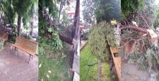 Çıkan Fırtınadan Ağaçlar Devrildi