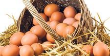 1,6 Milyar Adet Yumurta Üretildi
