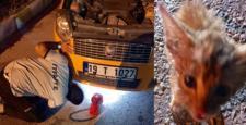 İtfaiye Yavru Kediyi Zor Kurtardı