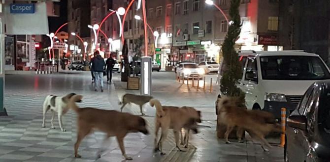 Sungurlu'da Başıboş Köpekler Tehlike Saçıyor