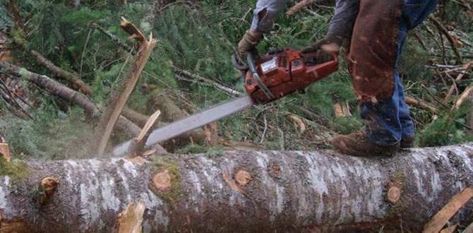 Odun Keserken Yaralandı