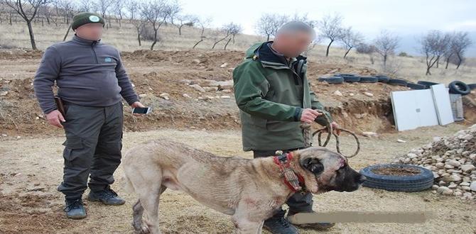 Köpek Bahisçilerine Operasyon Yapıldı