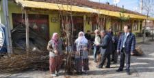 Laçin Üreticilere Ceviz Fidanı Dağıtıldı
