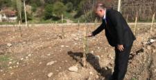 Dodurga'da Ağaçlandırma Seferberliği