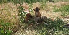 Köpeklere Kaymakamlık Sahip Çıktı
