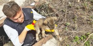 Mahsur Kalan Köpeğe İtfaiye Operasyonu