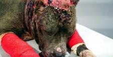 Hayvanlara İşkence Yapanlara Ceza Yağdı
