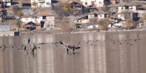 Türkiye'nin Yeni Kuş Cenneti Oldu