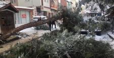 Ağaç Yoğun Kar Yağışına Dayanamadı