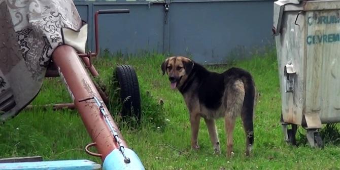 Komşu Köpeğinin Saldırısına Uğradı