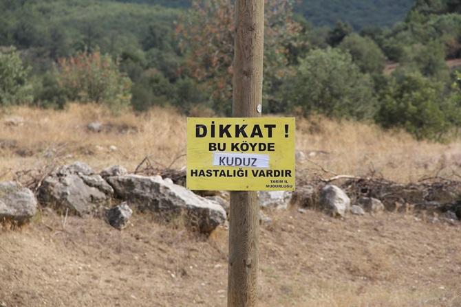 Mecitözü'nde Kuduz Alarmı!