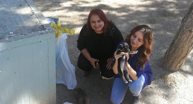 CHP'den Sokak Hayvanlarına Karşı Duyarlılık