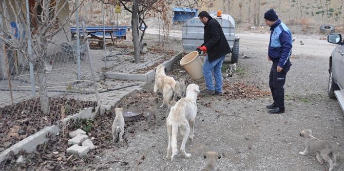 Bayat Belediyesi Sokak Hayvanlarına Sahip Çıkıyor