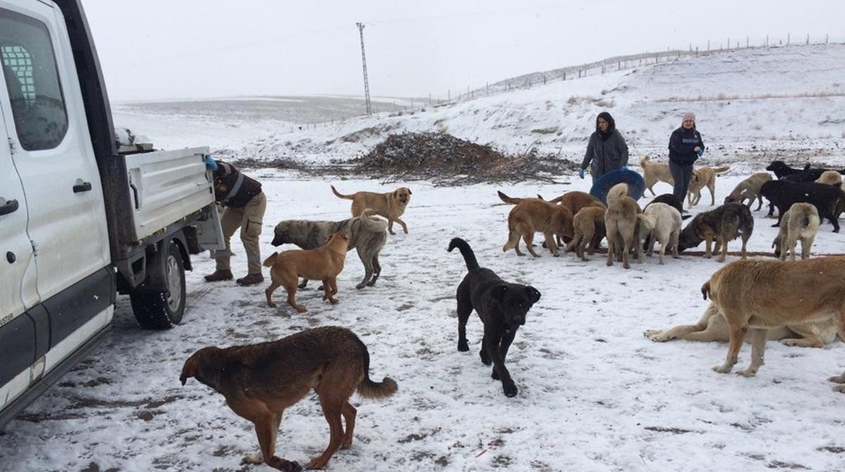 Sokak ve Yabani Hayvanlara Yem Bırakıldı