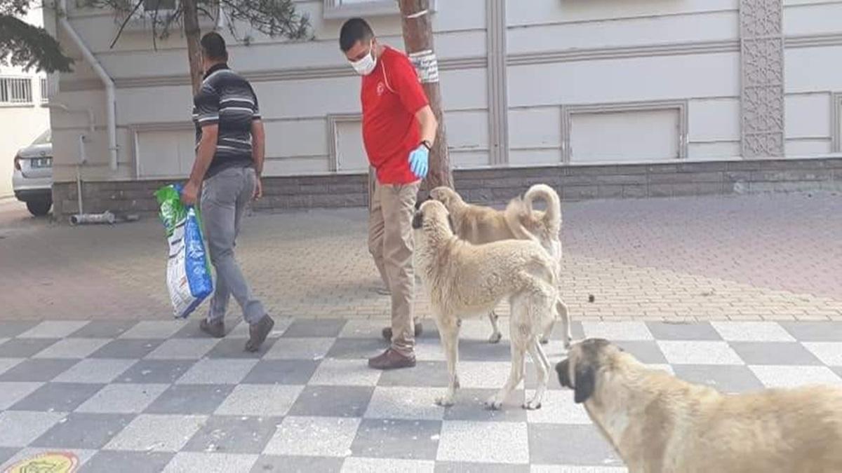 Bayramda Sokak Hayvanları Unutulmadı